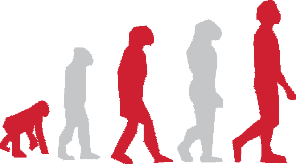 Image of human evolution